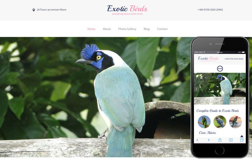Exotic Birds a Animal Category Flat Bootstrap Responsive Web Template